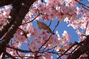 Cherry blossoms with a bird sitting on a branch
