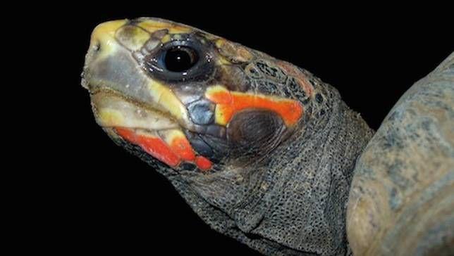 Tortuga desaparecida sobrevive en un almacén durante 30 años