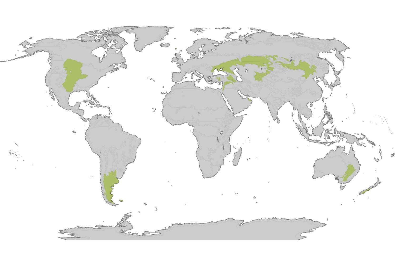 Temperate Grassland Map