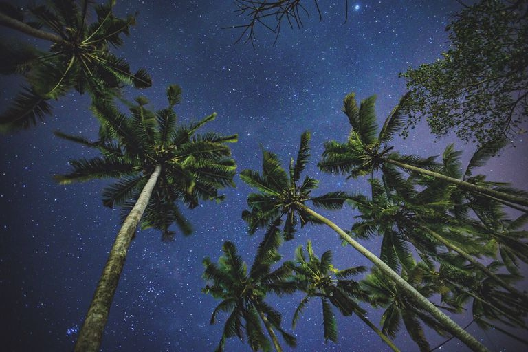 group of palm trees stretch toward clear dark sky filled with stars