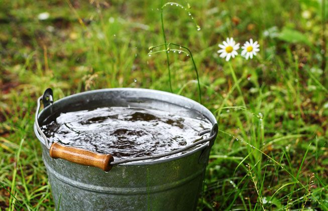 Water in a bucket next to a daisy