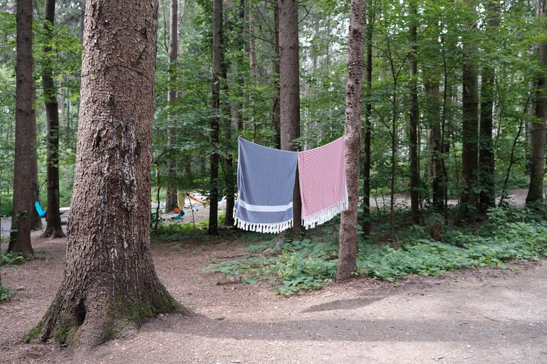 two towels hang dry between two tall trees at outdoor camping site