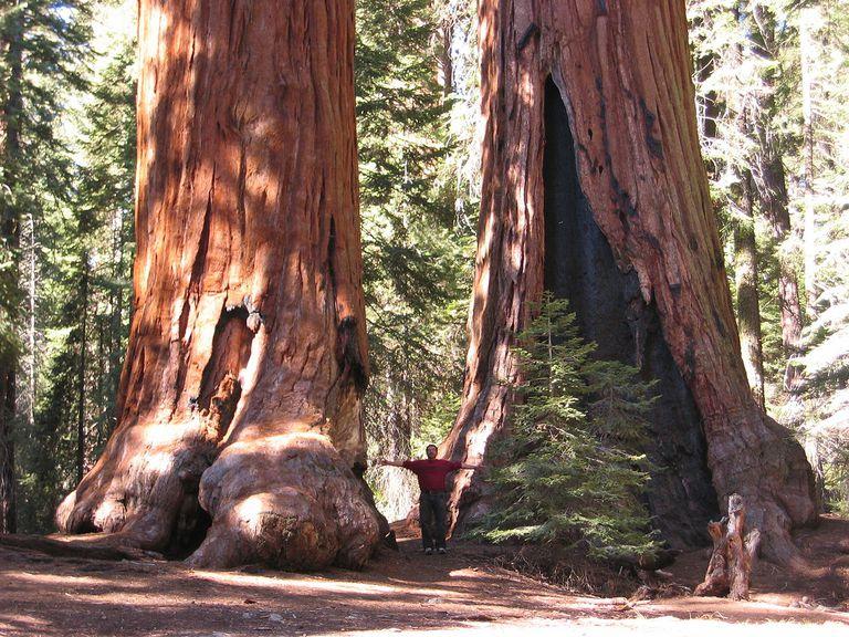 El hombre se venga de la muerte de un árbol plantando más de 100 gigantes en toda la ciudad