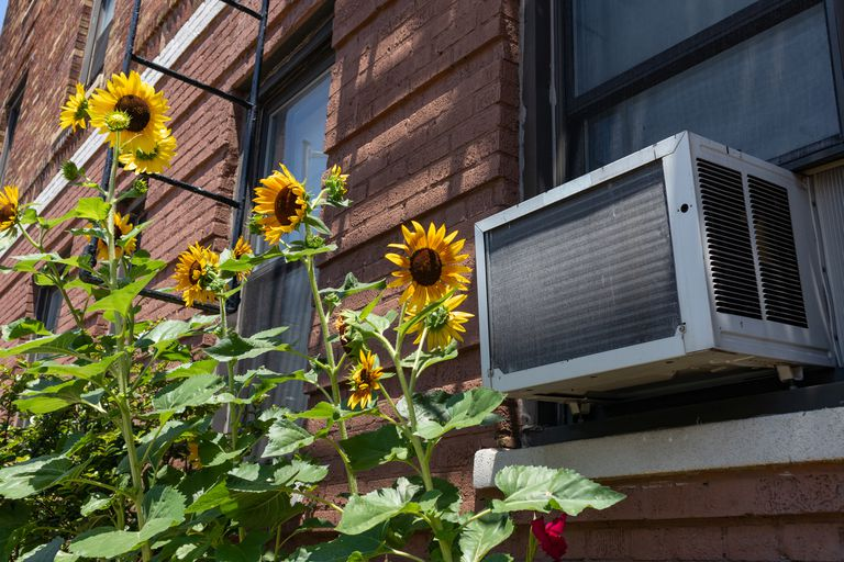 A large air conditioner in a window beside sunflowers.