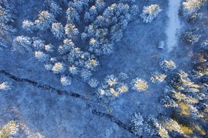 Aerial view of forest with a dusting of snow and cracked earth.