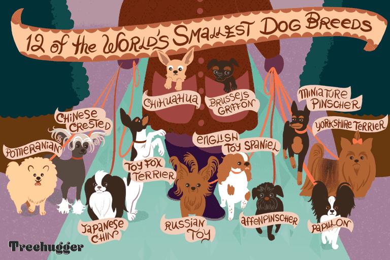 12 of world's smallest dog breeds