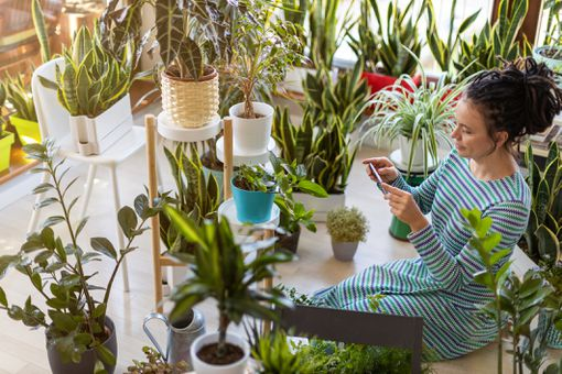Woman taking photo of potted plant with her smartphone
