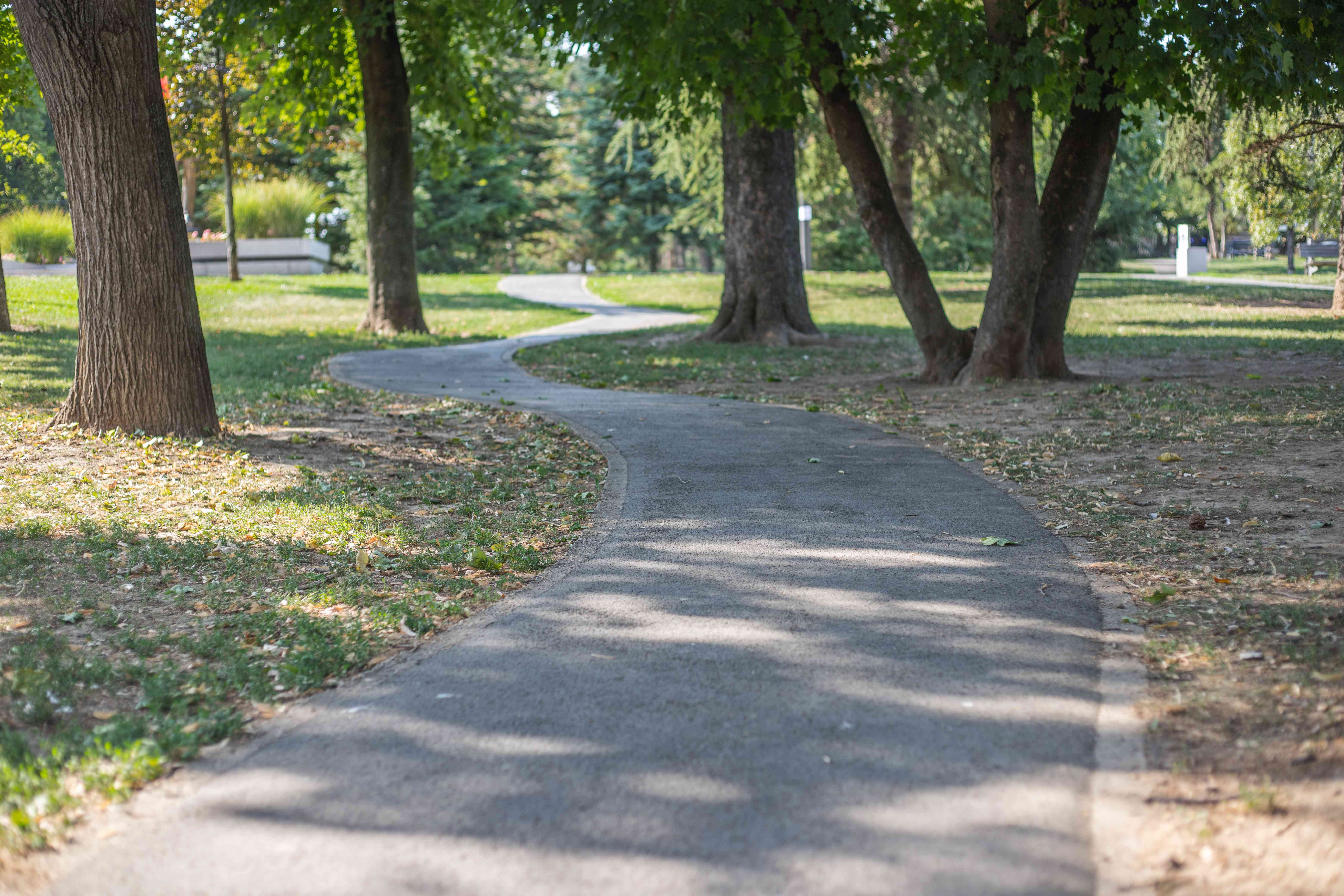 a paved winding walking path in a city park with mature trees