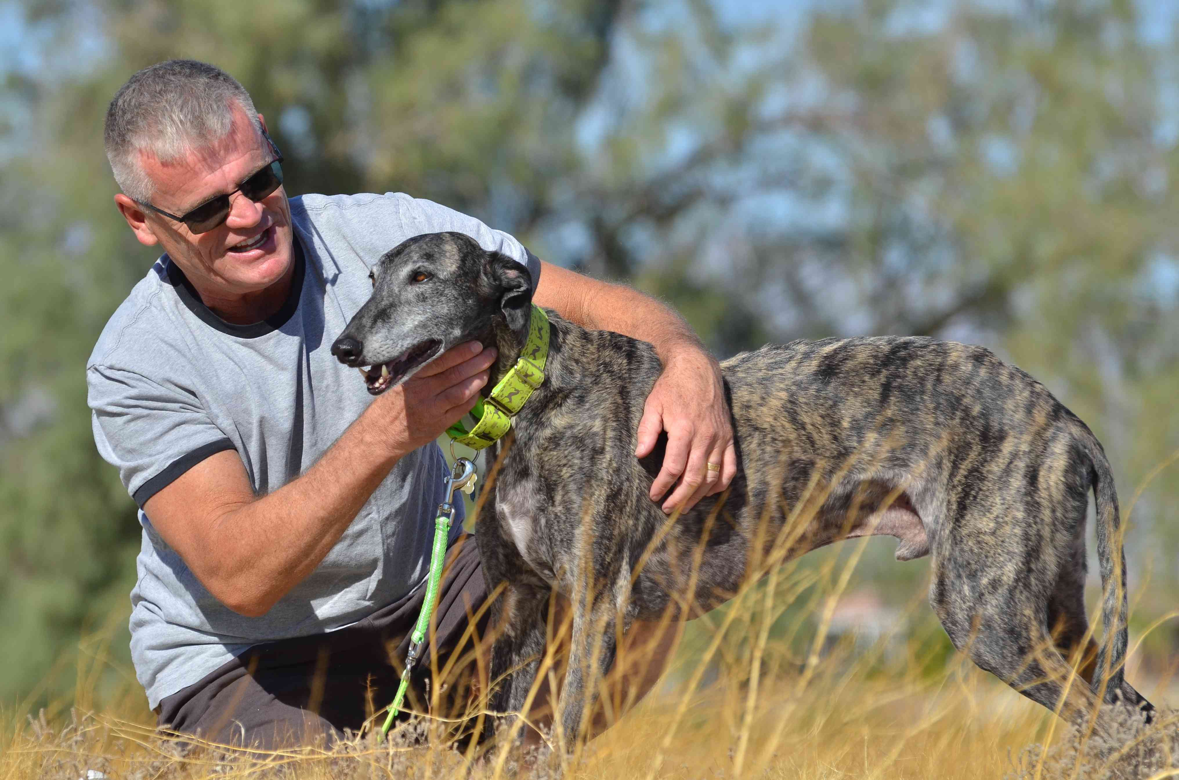 George Knott in a field with a galgo.