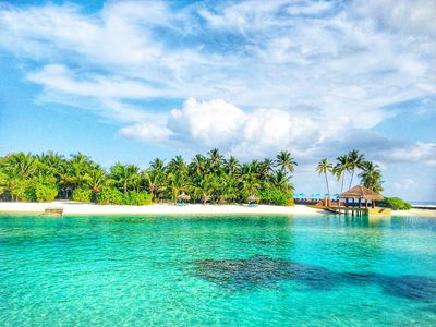 Clear, turquoise water laps against a palm tree-covered island in the Maldives