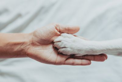 A dog paw in a human hand against white sheets.