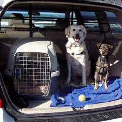Dogs sitting in the cargo area during cross-country move