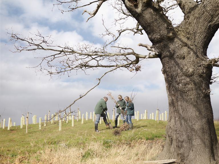 People putting trees on a sloped surface in Yorkshire England.