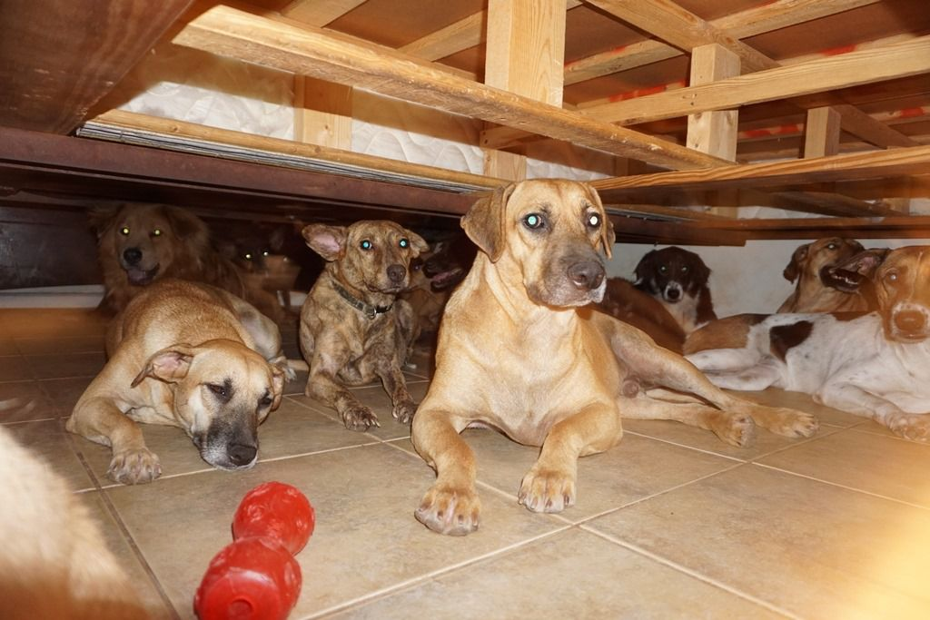 Dogs hang out under the bed.