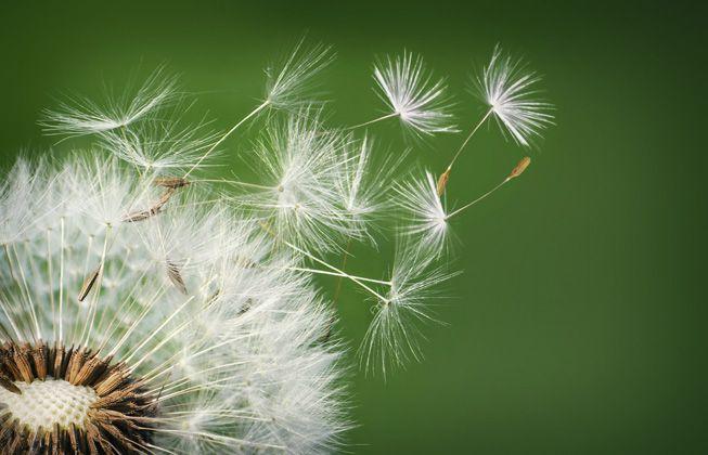 Por qué las plantas invasoras aman el cambio climático