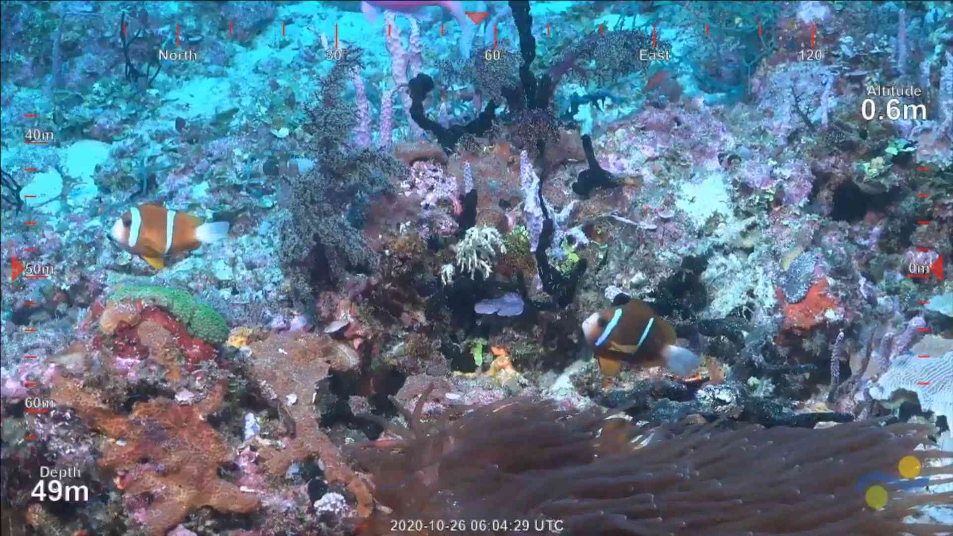 screenshot from the new reef dive