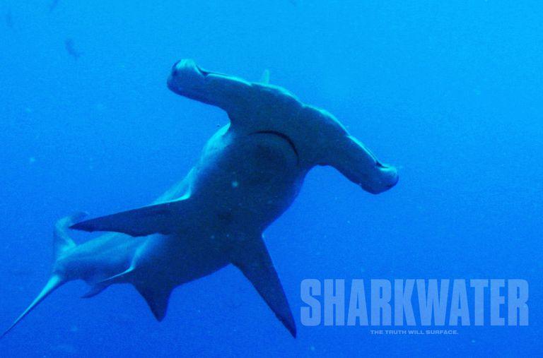 El cineasta Rob Stewart luchó para proteger a los tiburones, y ahora debemos continuar con su trabajo