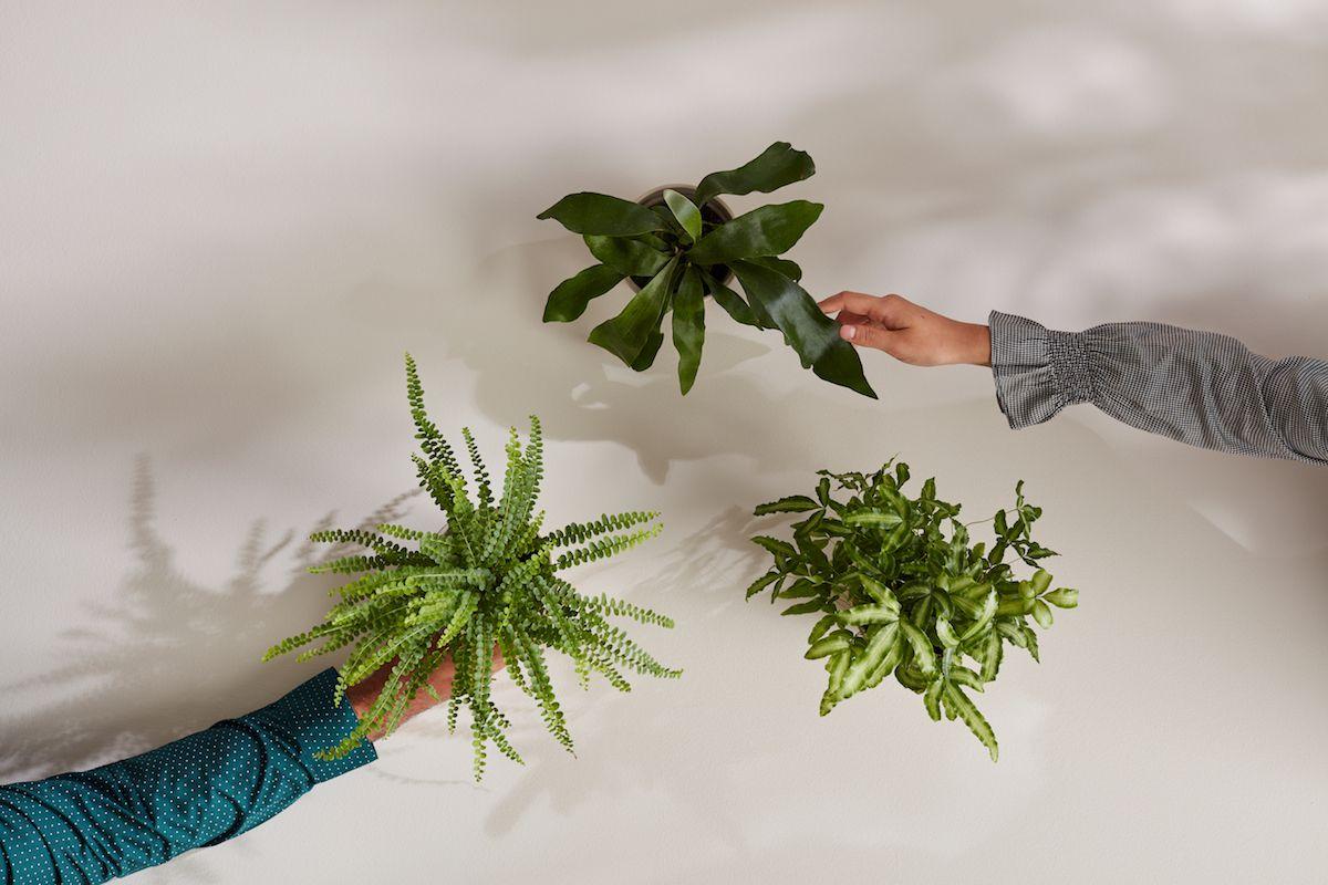 houseplant grouping