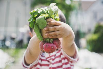 Boy harvesting radish in the farm