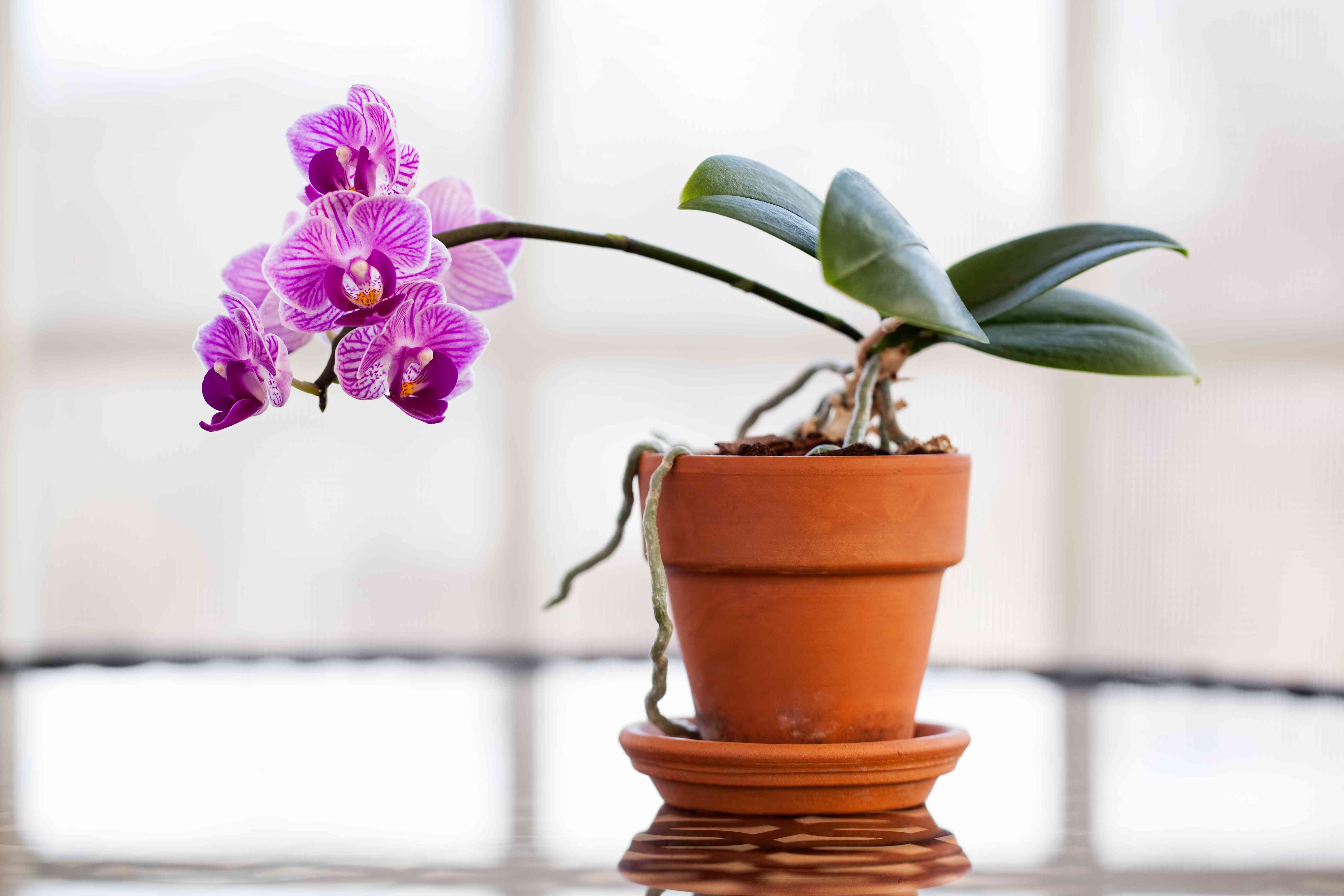 Close-Up Of Orchids Growing In Plant