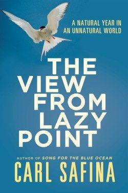 lazy point cover image