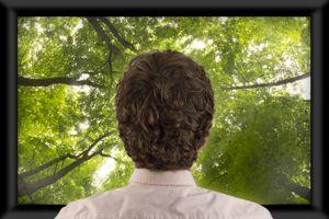 man watching trees on TV