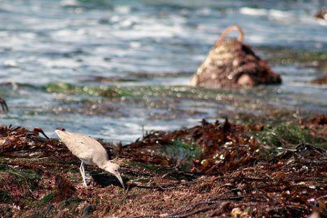 tide pool photo
