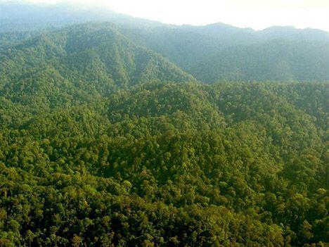 sumatran forest mountain photo