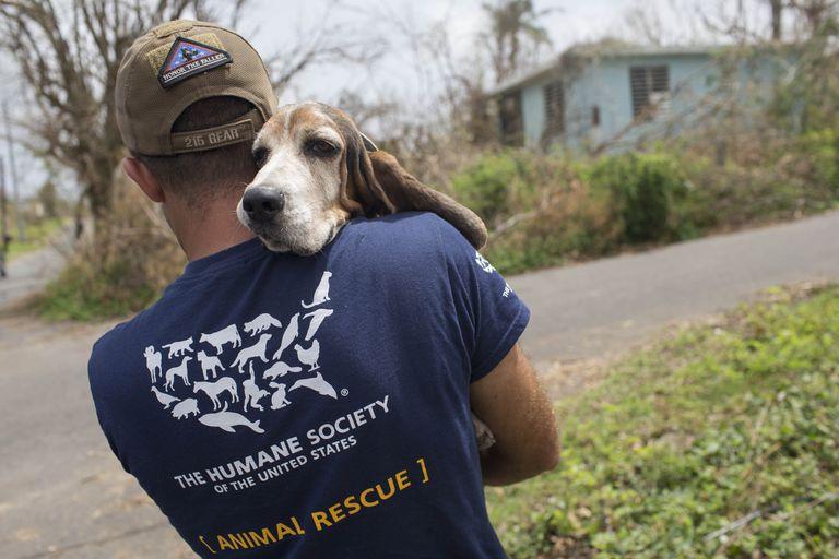 Cientos de perros están siendo transportados en avión desde Puerto Rico devastado por el huracán