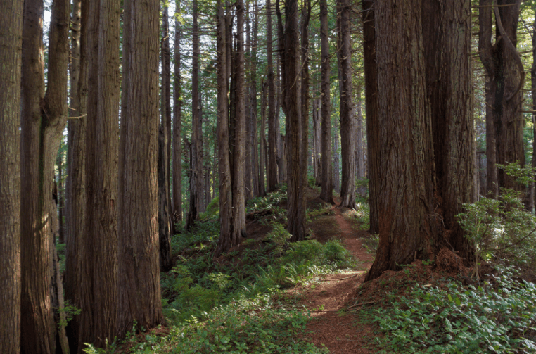 Prairie Creek State Park, Del Norte, California