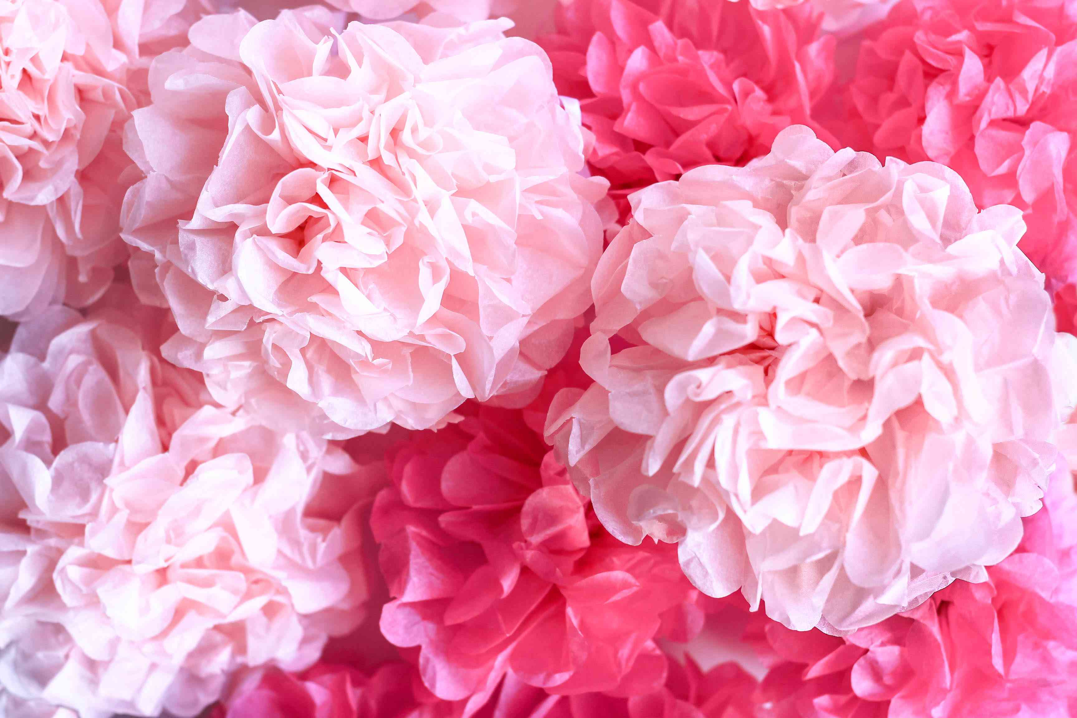 Tissue paper flowers, close up