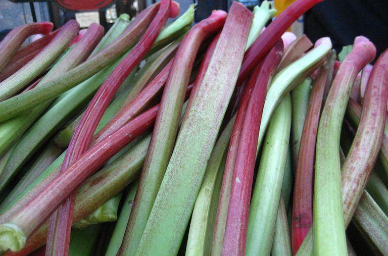 Stalks of rhubarb