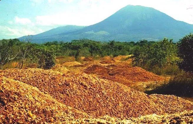Este montón de cáscaras de naranja de 12.000 toneladas es ahora un frondoso bosque costarricense