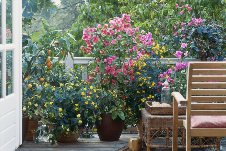 Potted flowers and a citrus tree on a deck
