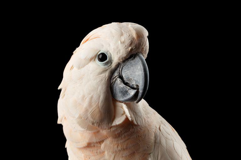 Los pájaros son muy inteligentes, a pesar de su pequeño cerebro