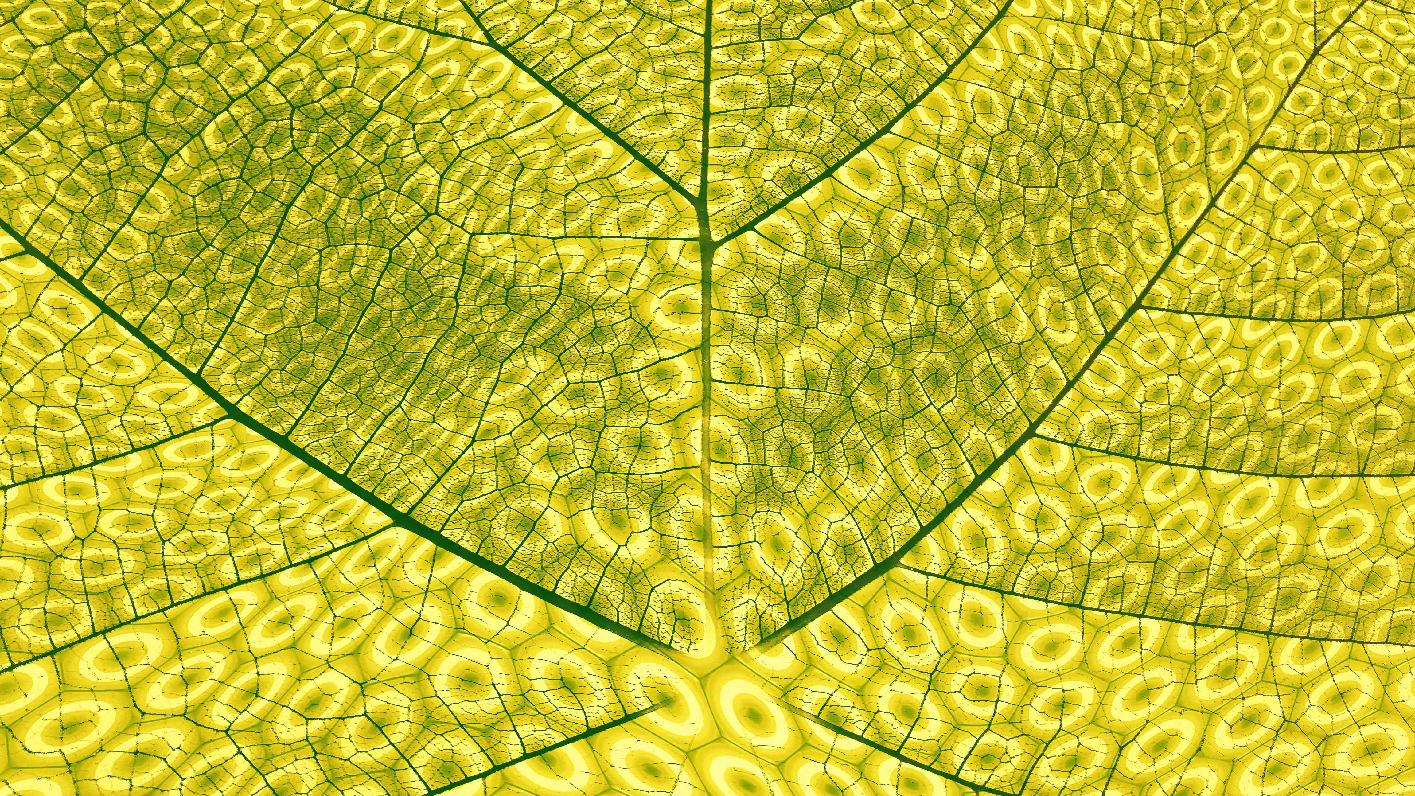 Close-up of leaf showing photosynthesisi