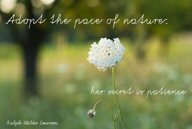 Adopt the pace of nature: her secret is patience. Ralph Waldo Emerson