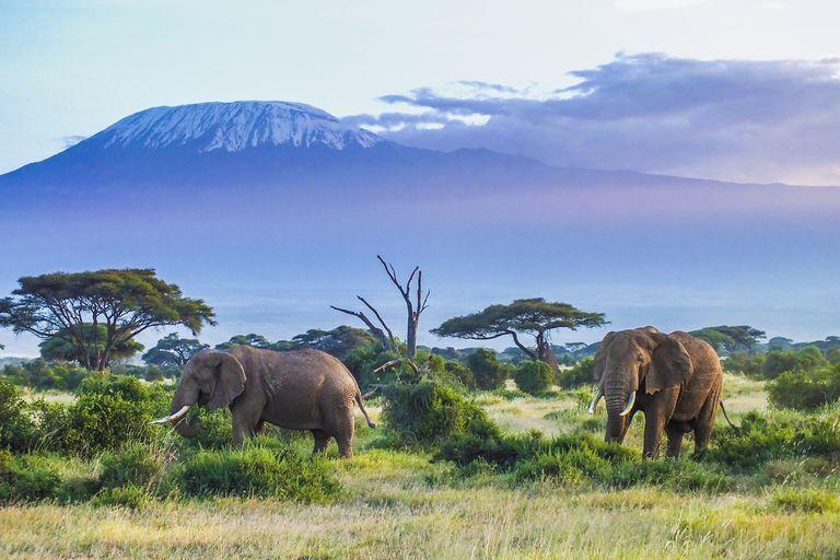 El riesgo de extinción es mayor para los animales más grandes y más pequeños de la Tierra