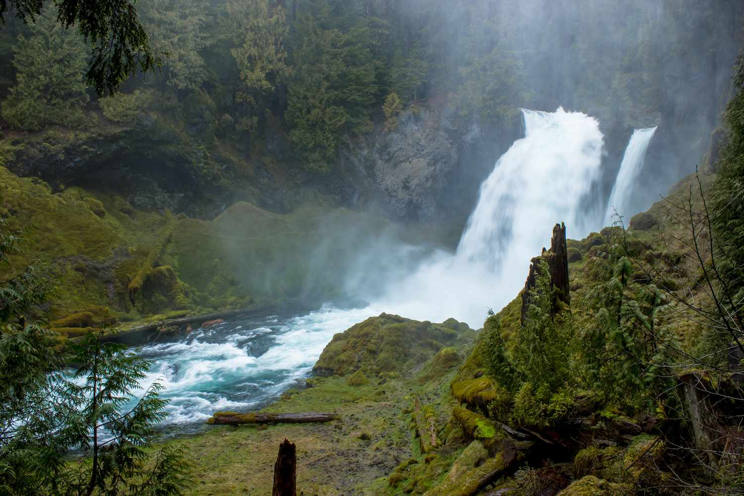 A roaring waterfall amidst the mossy green of a Eugene, Oregon forest