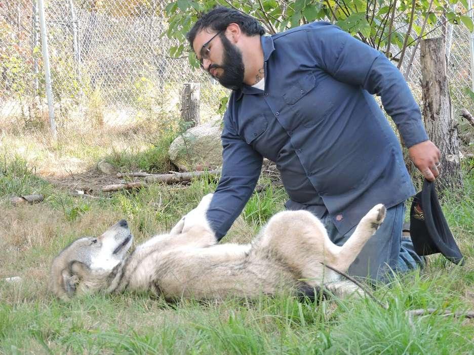 LARC veteran bonds with wolfdog