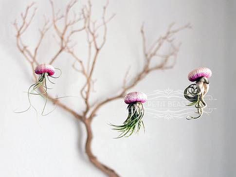 Jellyfish Air Plant