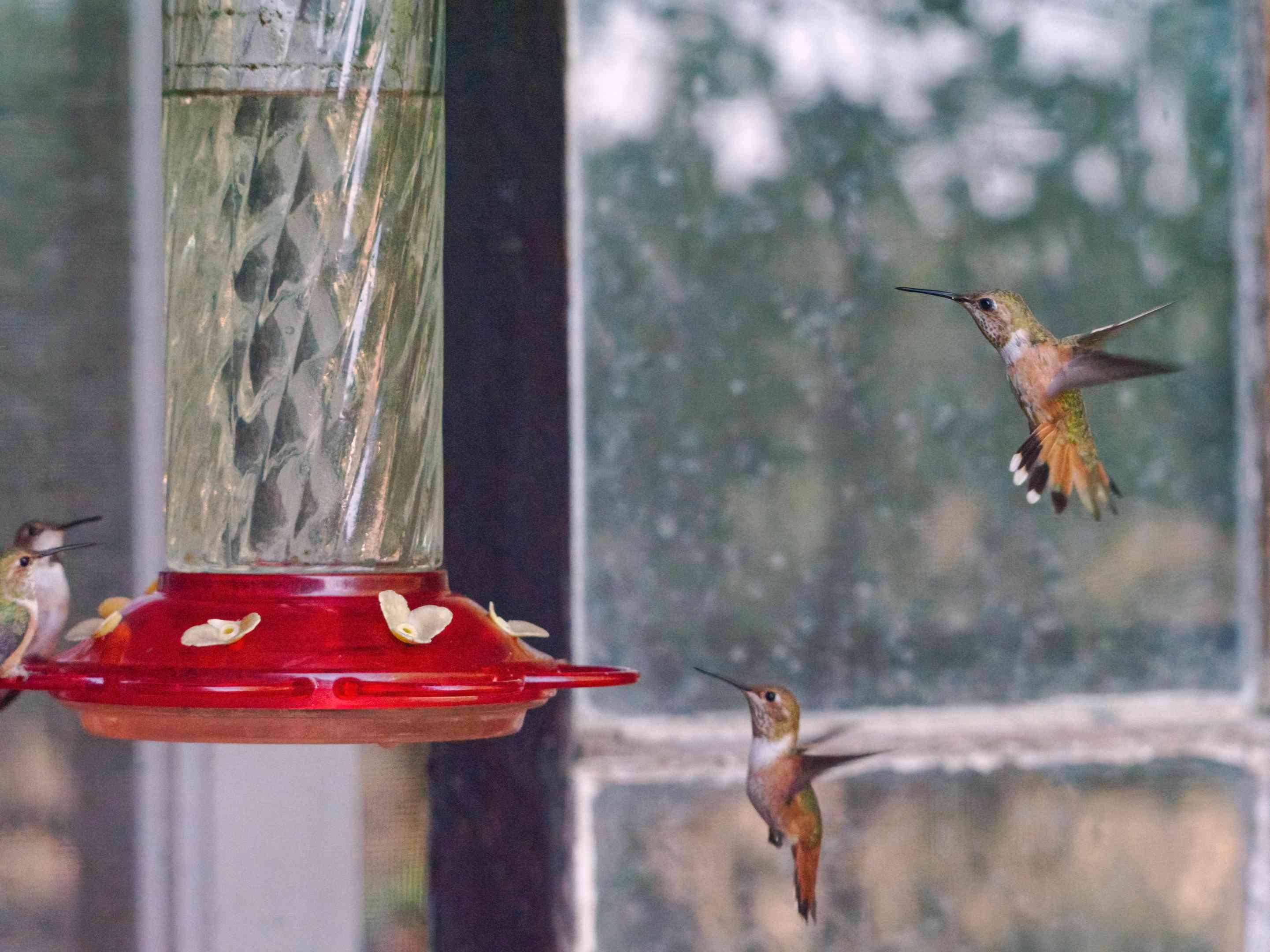 three hummingbirds crowd around plastic hummingbird feeder near window