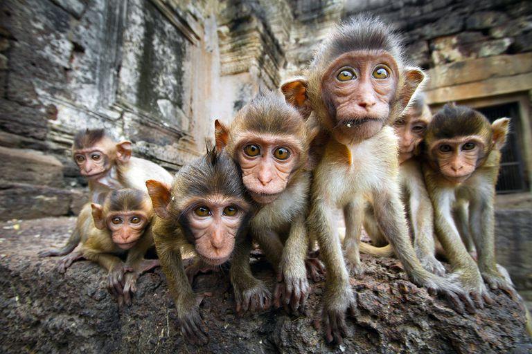 11 cosas que no sabías sobre los monos