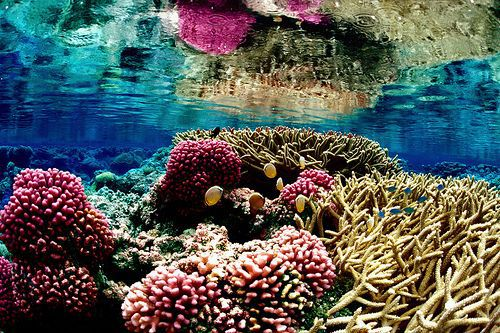 Coral reef photo.