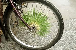 Bike Garden Mowhawk
