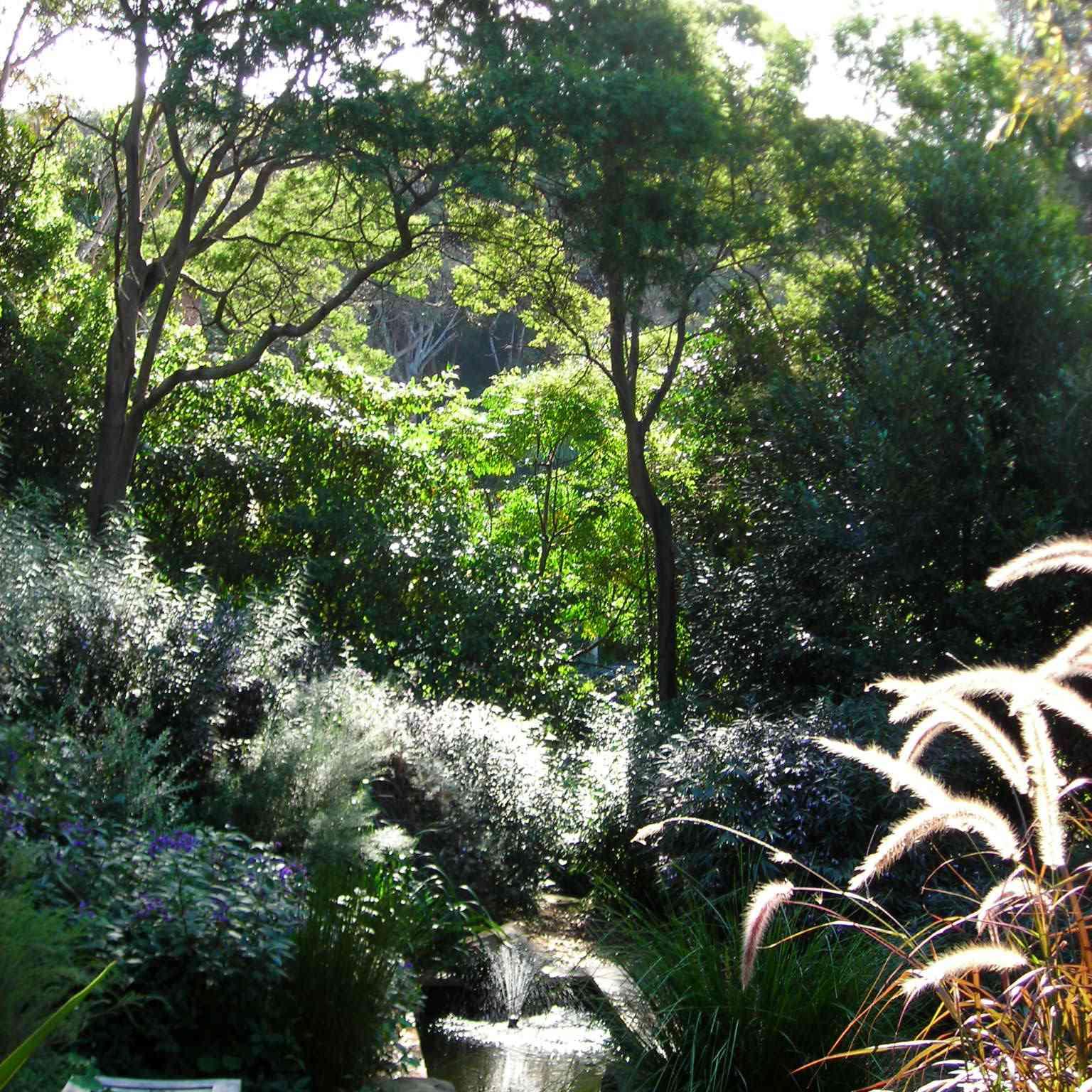A drought-tolerant garden north of Sydney, Australia.