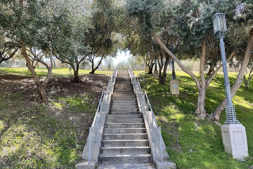 Barnsdall Olive Grove, 2021