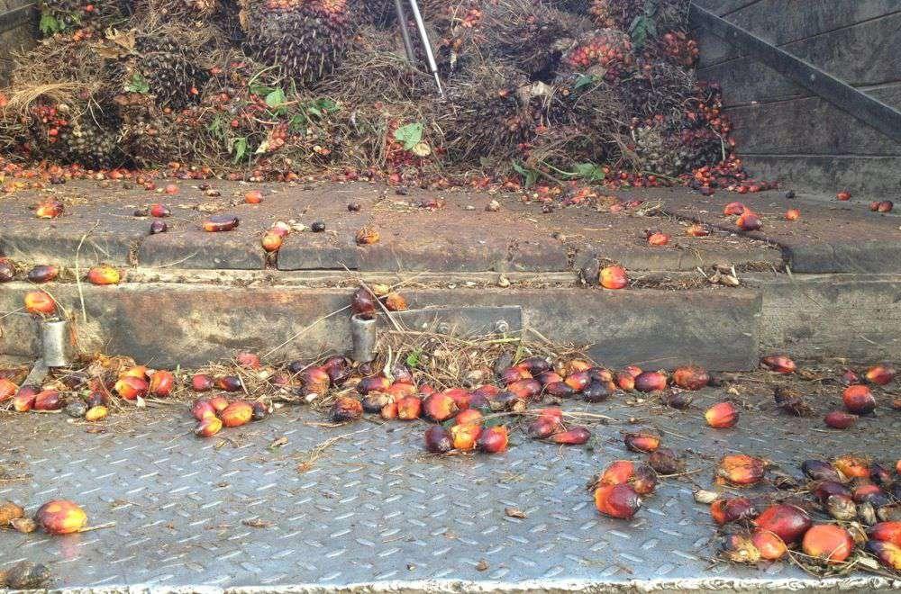 palm fruit delivered on ramp