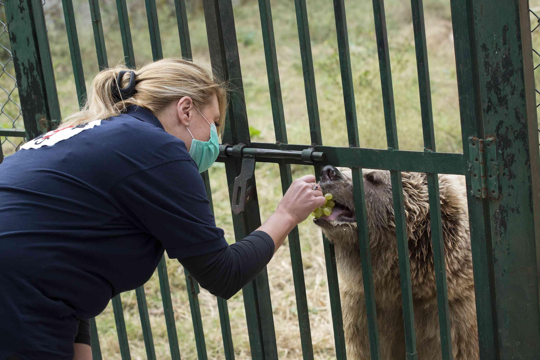 Dr. Marina Ivanova feeds Suzie at Marghazar Zoo.