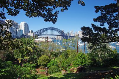 View to Sydney Harbour Bridge and the harbour from Wendy's Secret Garden, a waterfront garden filled with lush green plants, palm trees, and large shade trees